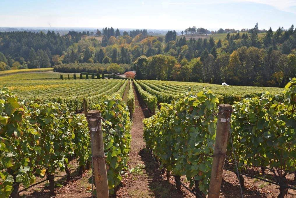 Polk-County_Vineyards
