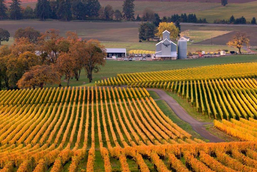 Yamhill-County_Fall-Vineyards